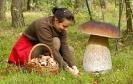 Фейковый гриб