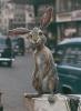 А был ли кролик?